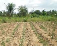 Piantare e coltivare i pomodori for Piantare pomodori