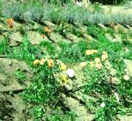 immagine-scaropata-con-piante