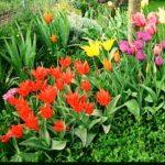 immagine-piante-bulbose