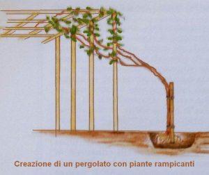 pergola-piante-rampicanti